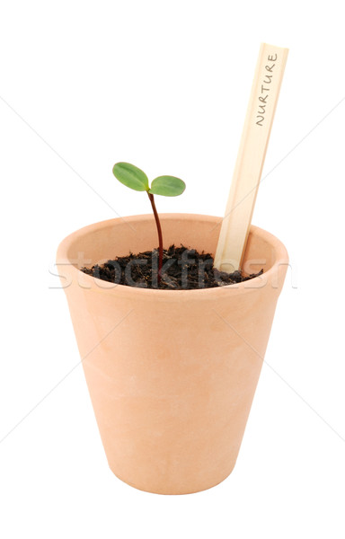 Stock photo: Seedling sown in a flowerpot with a label marked 'nurture'