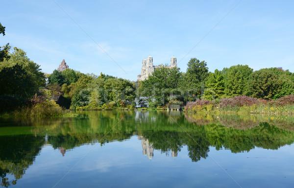 Tartaruga lagoa Central Park árvores luxuriante plantas Foto stock © sarahdoow