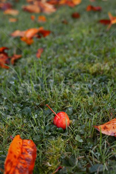Crab apple fruit among golden fall leaves Stock photo © sarahdoow