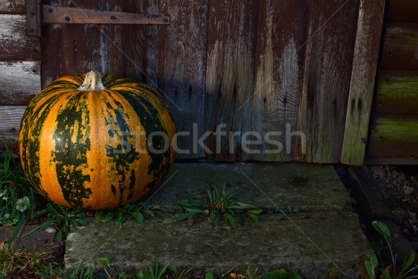 Large pumpkin on a step by a wooden door Stock photo © sarahdoow