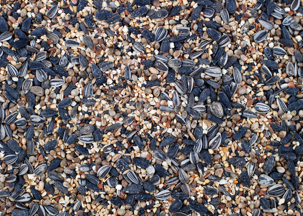 Foto d'archivio: Uccello · sementi · abstract · texture · sfondo · girasole