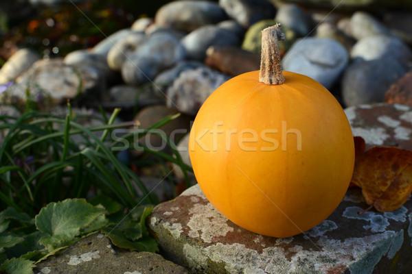 Close-up of orange gourd on a garden wall Stock photo © sarahdoow