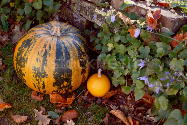 Large striped pumpkin with a small orange gourd  Stock photo © sarahdoow
