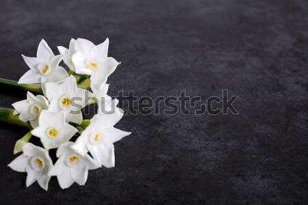 Pachnący biały kwiaty górę ciemne Zdjęcia stock © sarahdoow