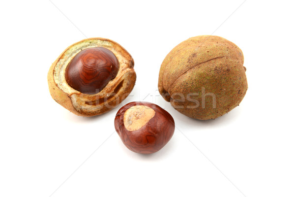 Ripe conkers in open and unopened smooth capsules Stock photo © sarahdoow