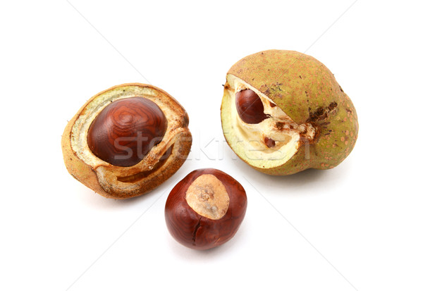 Conkers and open seed cases from a red horse chestnut Stock photo © sarahdoow