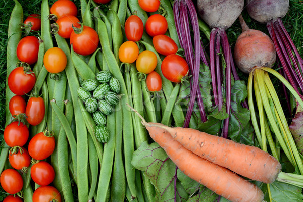 Vegetables freshly gathered from the allotment Stock photo © sarahdoow