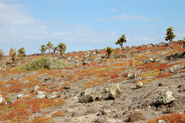 Rocky terrain in the Galapagos Islands Stock photo © sarahdoow