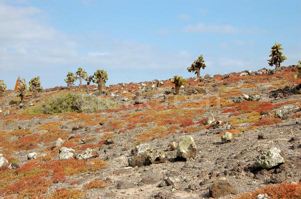 Terep szigetek sziget zöld kék utazás Stock fotó © sarahdoow