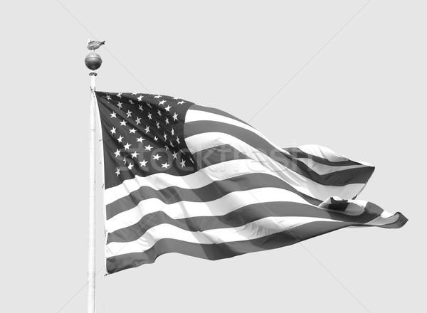 Amerikan bayrağı açık gökyüzü Yıldız martı Stok fotoğraf © sarahdoow