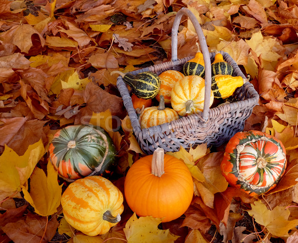 Basket full of ornamental pumpkins with colourful gourds Stock photo © sarahdoow