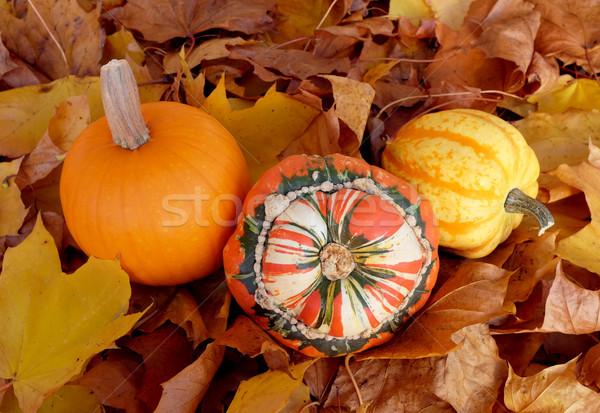 тыква сквош осень листьев тюрбан желтый Сток-фото © sarahdoow
