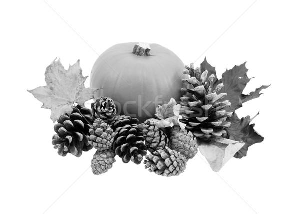 Foto d'archivio: Caduta · foglie · pino · maturo · zucca
