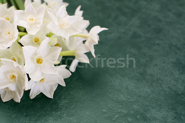 White narcissus flowers on mottled green background  Stock photo © sarahdoow