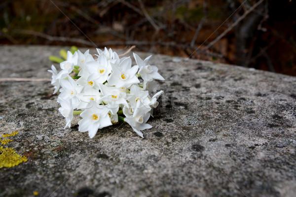 White narcissus flowers on stone bench Stock photo © sarahdoow