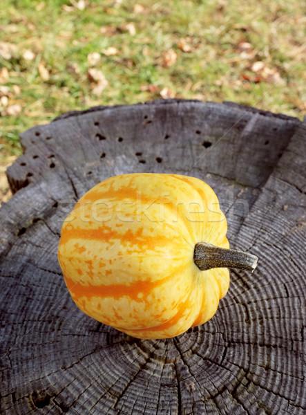 Zdjęcia stock: żółty · festiwalu · miąższ · wyblakły · drzewo · pomarańczowy