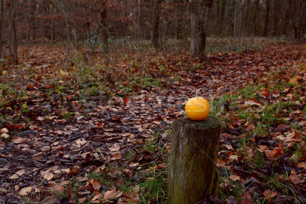 Small pumpkin on wooden post in autumnal forest Stock photo © sarahdoow