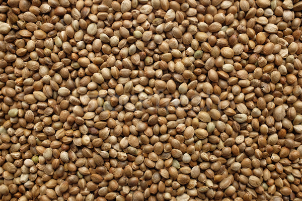 Hemp seeds background Stock photo © sarahdoow