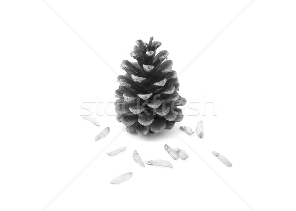 Pine cone surrounded by seeds Stock photo © sarahdoow