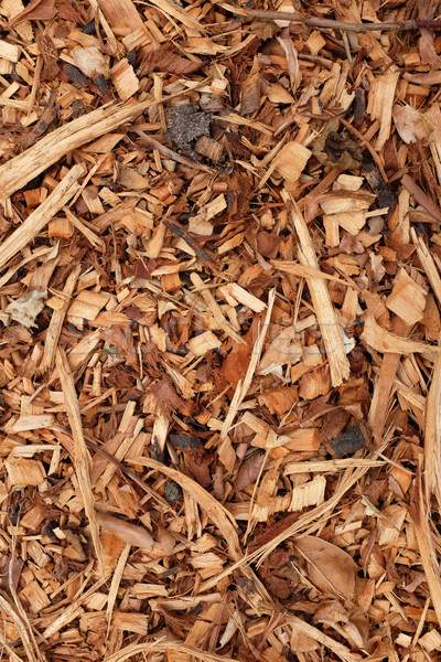 Corteza hojas madera resumen textura Foto stock © sarahdoow