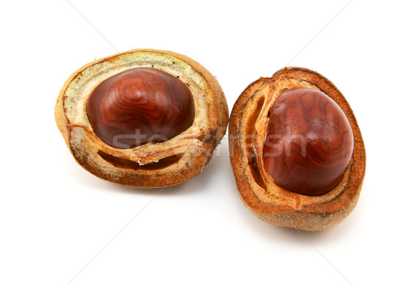 Shiny brown conkers in smooth cases  Stock photo © sarahdoow
