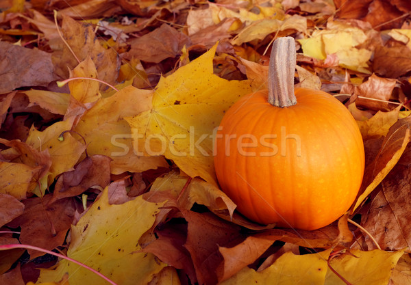 Pumpkin among autumnal sycamore leaves Stock photo © sarahdoow