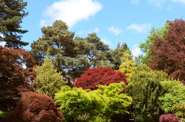 Ornamental trees and shrubs with red and green foliage Stock photo © sarahdoow