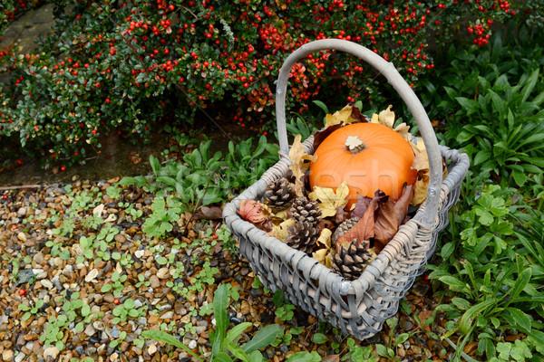 Foto stock: Otono · cesta · calabaza · abeto · hojas · rojo