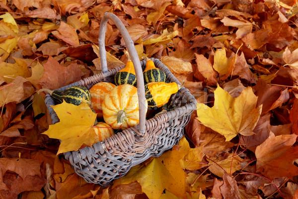 Fall basket of ornamental pumpkins with yellow leaf  Stock photo © sarahdoow