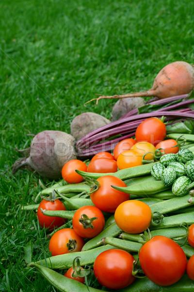 Czerwony żółty pomidory fasola burak trawy Zdjęcia stock © sarahdoow