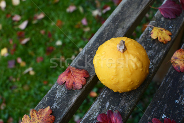 Sarı rustik ahşap bank düşmek Stok fotoğraf © sarahdoow