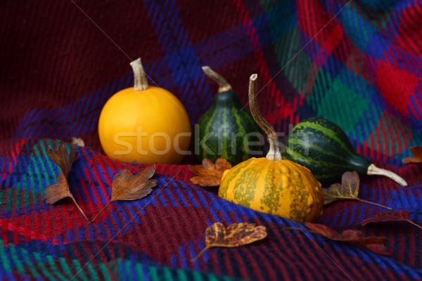 Assorted yellow and green gourds with leaves on plaid fabric Stock photo © sarahdoow