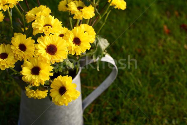 Citromsárga krizantém virágok fém kancsó fű Stock fotó © sarahdoow