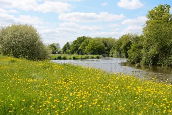Rivier weide Engeland rivieroever Stockfoto © sarahdoow