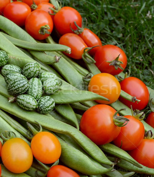 Handful of cucamelons with tomatoes and runner beans  Stock photo © sarahdoow