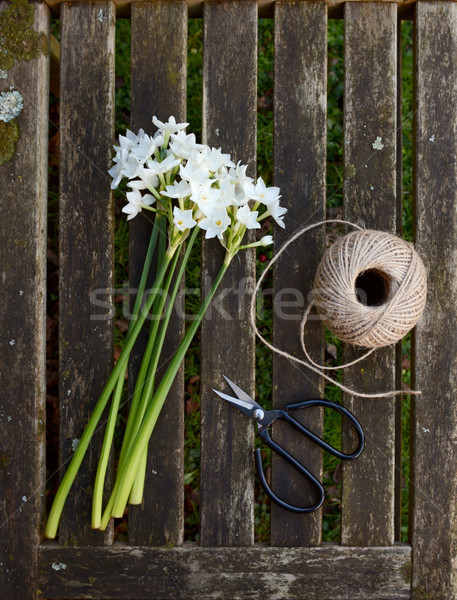 Narcissi stems on wooden bench with twine and scissors Stock photo © sarahdoow