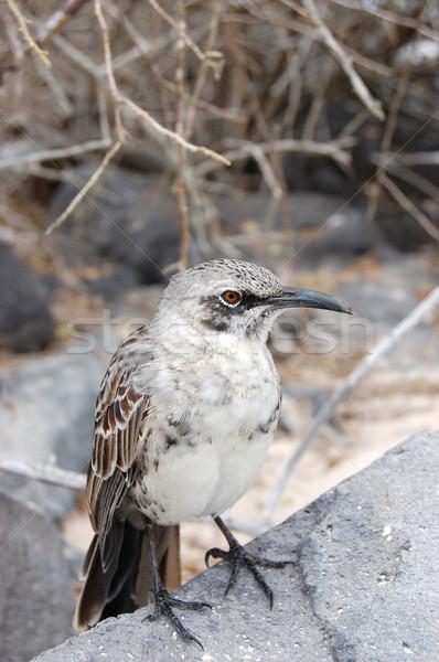 Occhi natura uccello rock Foto d'archivio © sarahdoow