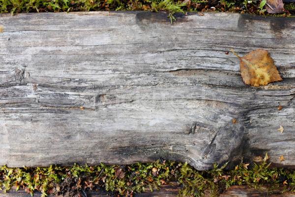 Verweerde houten plank weelderig mos Stockfoto © sarahdoow