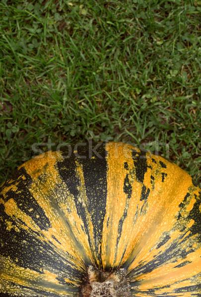 Listrado verde amarelo abóbora grama acima Foto stock © sarahdoow