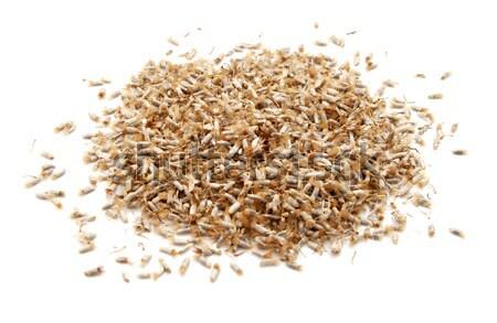 Geheel komijn zaden geïsoleerd witte Spice Stockfoto © sarahdoow