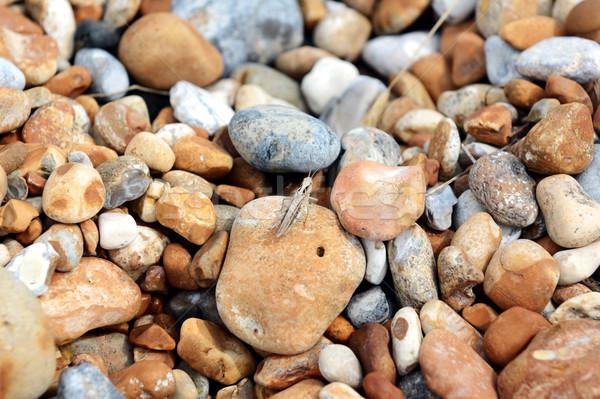 Gafanhoto sessão pedras pedra inseto Foto stock © sarahdoow