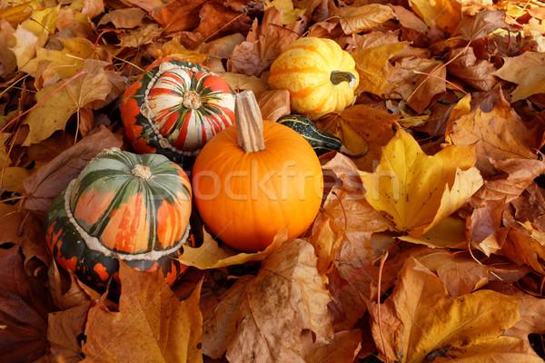 Tulband pompoen variëteit kleuren bed Stockfoto © sarahdoow