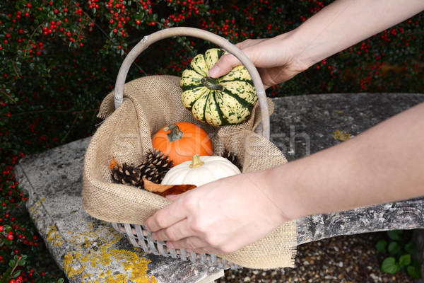 Woman adds a harlequin pumpkin to a basket of gourds Stock photo © sarahdoow