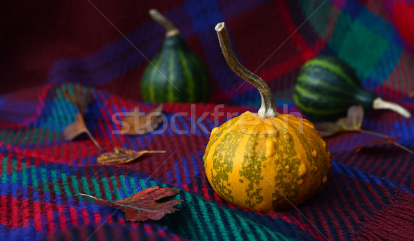Warty yellow ornamental gourd with leaves and green gourds Stock photo © sarahdoow