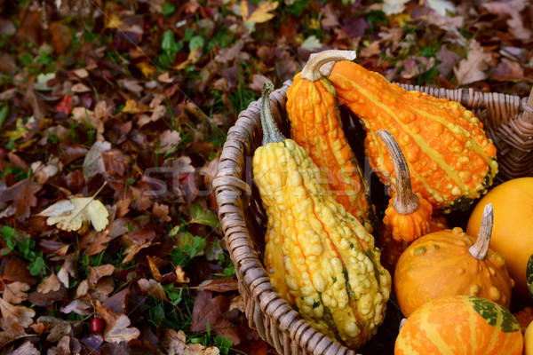 Warty ornamental gourds in a basket on autumn leaves Stock photo © sarahdoow