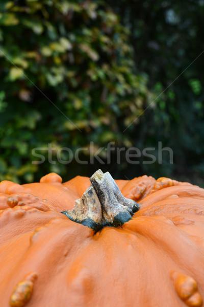 Groot pompoen bladeren exemplaar ruimte natuur Stockfoto © sarahdoow