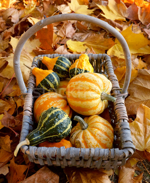 Rustic basket of yellow and green ornamental gourds Stock photo © sarahdoow