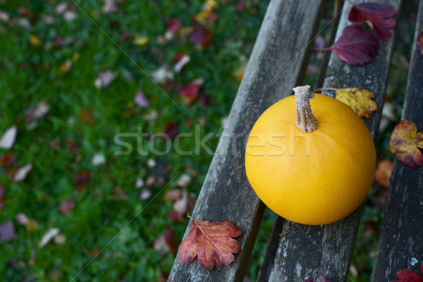 Yellow gourd on bench, above lawn covered with leaves Stock photo © sarahdoow