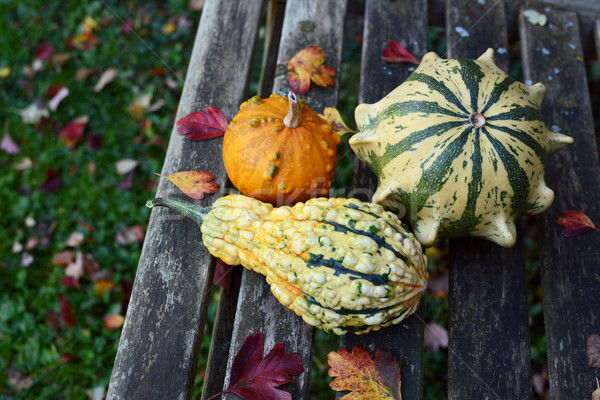 Three warty and colourful ornamental gourds among autumnal leave Stock photo © sarahdoow
