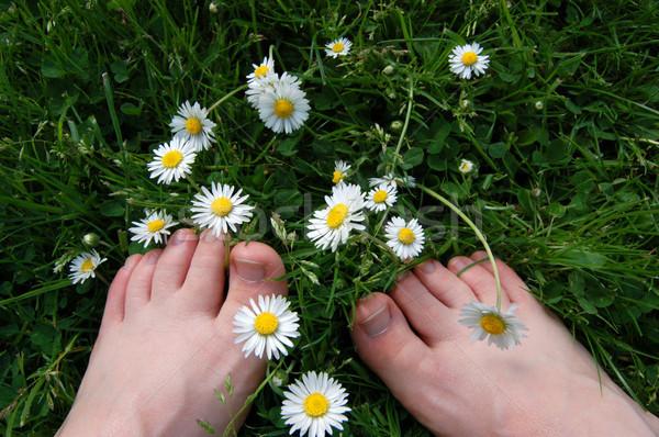 Pieds nus marguerites deux pieds nus trèfle herbe Photo stock © sarahdoow